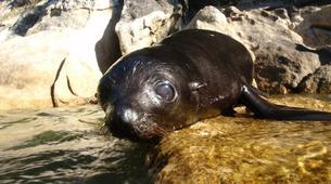 Sea Kayaking-Marahau-Wildlife Kayak Tour in Tonga Island Marine Reserve-3