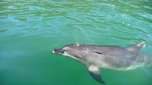 Sea Kayaking-Marahau-Wildlife Kayak Tour in Tonga Island Marine Reserve-2