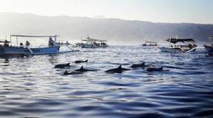Experiences Wildlife-Singaraja-Dolphin Watching at Lovina Beach-5