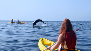Sea Kayaking-Los Cristianos, Tenerife-Kayaking with dolphins and snorkeling with turtles in Tenerife-5