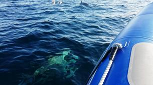 Jet Boating-Lisbon-Speedboat tour in Arrabida Natural Park near Lisbon-6