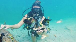Scuba Diving-Dubai-Discover Scuba Diving at Jumeirah Beach in Dubai-1