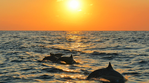 """Wildlife Experiences-Mayotte-Safari """"Grand matin"""" pour observer les baleines et les dauphins, Ile de Mayotte-1"""