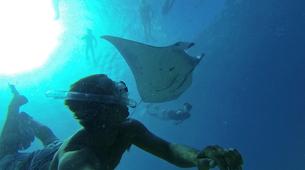 Wildlife Experiences-Mayotte-Safari dauphins et raies manta, Ile de Mayotte-2