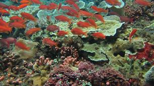 Snorkeling-Nusa Lembongan-Snorkeling Day Trip from Bali to Nusa Lembongan and Nusa Penida-4