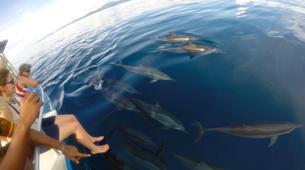 Wildlife Experiences-Mayotte-Safari Baleines sur l'île de Mayotte-4