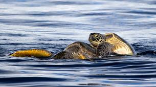 Wildlife Experiences-Mayotte-Safari dauphins et raies manta, Ile de Mayotte-8