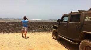 Wildlife Experiences-Sal-Shark Watching Experience on Sal Island-3