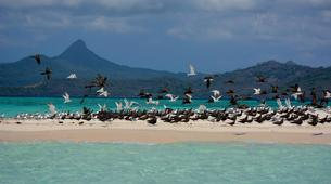 Wildlife Experiences-Mayotte-Safari dauphins et raies manta, Ile de Mayotte-9