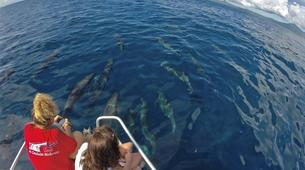 Wildlife Experiences-Mayotte-Safari dauphins et raies manta, Ile de Mayotte-1
