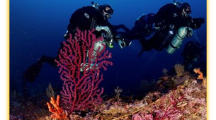 Scuba Diving-Ischia-Try Scuba diving in Ischia, near Naples-3