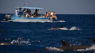 Wildlife Experiences-Mayotte-Safari dauphins et raies manta, Ile de Mayotte-13