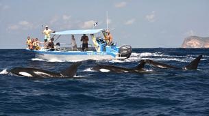 Wildlife Experiences-Mayotte-Safari dauphins et raies manta, Ile de Mayotte-17