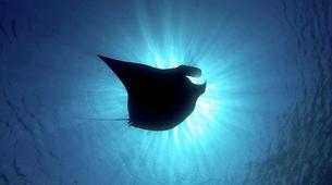 Wildlife Experiences-Mayotte-Safari dauphins et raies manta, Ile de Mayotte-12