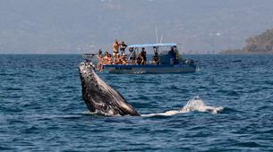 """Wildlife Experiences-Mayotte-Safari """"Grand matin"""" pour observer les baleines et les dauphins, Ile de Mayotte-7"""