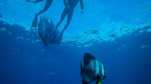Freediving-Hyeres-Relaxation diving in Hyeres, France-6