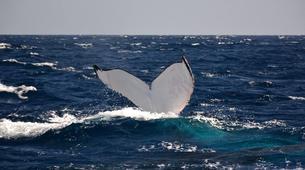 Wildlife Experiences-Mayotte-Safari Baleines sur l'île de Mayotte-10