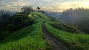 Hiking / Trekking-Ubud-Ubud Rice Paddies Trekking with Campuhan Ridge Walk-2