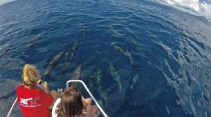Wildlife Experiences-Mayotte-Safari Baleines sur l'île de Mayotte-1