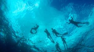 Wildlife Experiences-Mayotte-Safari dauphins et raies manta, Ile de Mayotte-10