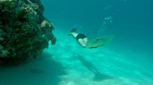Wildlife Experiences-Mayotte-Safari dauphins et raies manta, Ile de Mayotte-7