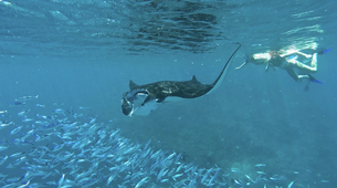 Wildlife Experiences-Mayotte-Safari dauphins et raies manta, Ile de Mayotte-5