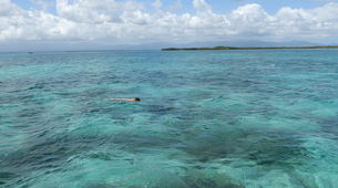 Snorkeling-Port-Louis, Grande-Terre-Excursions bateau et snorkeling à Port Louis, Guadeloupe-2