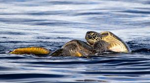 Wildlife Experiences-Mayotte-Safari Baleines sur l'île de Mayotte-2