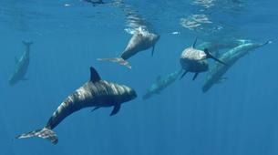 """Wildlife Experiences-Mayotte-Safari """"Grand matin"""" pour observer les baleines et les dauphins, Ile de Mayotte-6"""