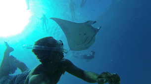 Wildlife Experiences-Mayotte-Safari dauphins et raies manta, Ile de Mayotte-3