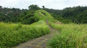 Hiking / Trekking-Ubud-Ubud Rice Paddies Trekking with Campuhan Ridge Walk-1