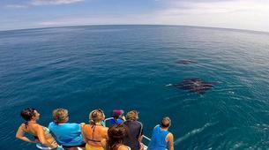Wildlife Experiences-Mayotte-Safari Baleines sur l'île de Mayotte-9