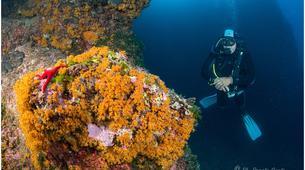 Scuba Diving-Ischia-Try Scuba diving in Ischia, near Naples-1
