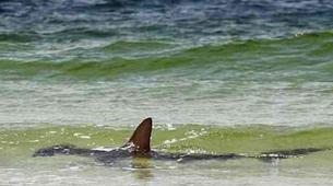 Wildlife Experiences-Sal-Shark Watching Experience on Sal Island-2