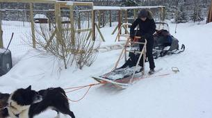 Dog sledding-Luleå-Drive Your Own Dog Sled in Swedish Lapland-2