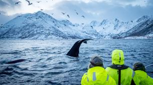 Wildlife Experiences-Alta-Whale Watching Tour in Altafjord-1