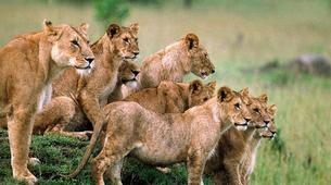 Hiking / Trekking-Kampala-12-Day Ultimate East African Wildlife Tour-6