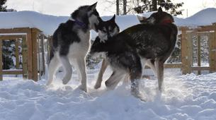 Snowshoeing-Luleå-Snowshoe & Dog Sled Adventure in Swedish Lapland-3