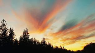 Dog sledding-Luleå-Northern Lights Adventure in Swedish Lapland-3