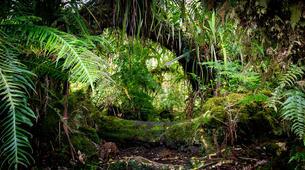 Hiking / Trekking-Cirque de Salazie, Hell-Bourg-Hiking excursion at Bélouve and Le Trou de Fer, Réunion-6