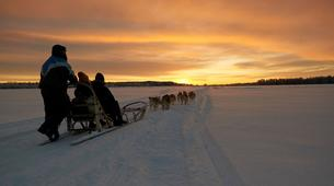 Dog sledding-Luleå-Northern Lights Adventure in Swedish Lapland-1