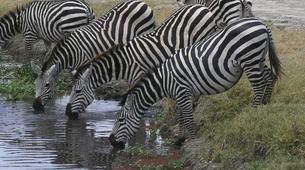 Hiking / Trekking-Kampala-12-Day Ultimate East African Wildlife Tour-1