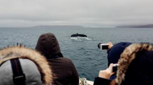 Wildlife Experiences-Oqaatsut-Whale Watching in Disko Bay-2
