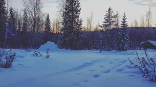Dog sledding-Luleå-Northern Lights Adventure in Swedish Lapland-4