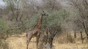 Hiking / Trekking-Kampala-12-Day Ultimate East African Wildlife Tour-3