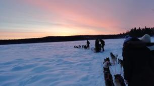 Dog sledding-Luleå-Drive Your Own Dog Sled at Night in Swedish Lapland-4