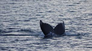 Wildlife Experiences-Alta-Whale Watching Tour in Altafjord-3