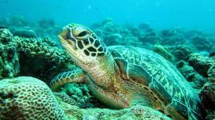Plongée sous-marine-Ile Maurice-Initiation plongée, île Maurice-3