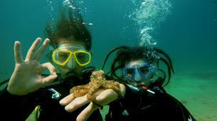 Scuba Diving-Athens-Discover Scuba Diving in Agia Marina beach, near Athens-2