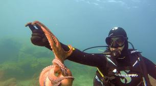 Scuba Diving-Athens-Discover Scuba Diving in Agia Marina beach, near Athens-1
